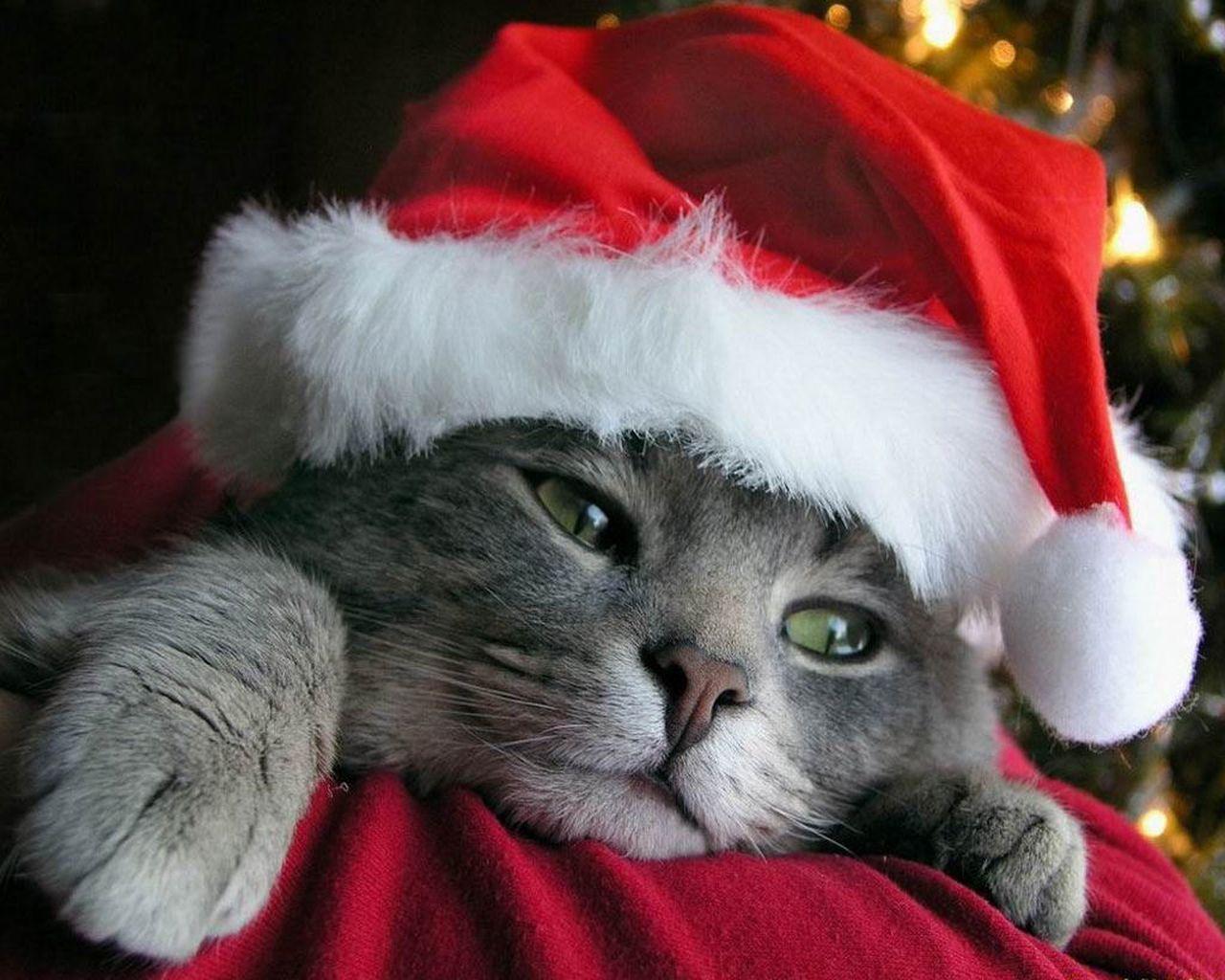 Priecīgus Ziemassvētkus!!!